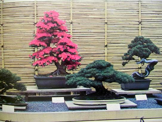 Image for BONSAI SUISEKI SHOW AT EXPO '70